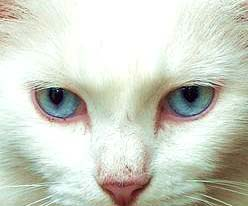 Darwin's deaf white cat-- example of redox signaling